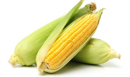 khasiat jagung